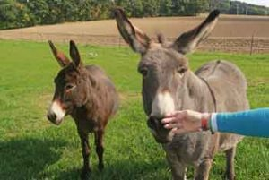 donkey therapy prader willi syndrome